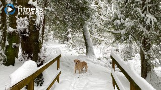 Snowy Walk with Loki in 100 Year Old Forest (19 Minutes)